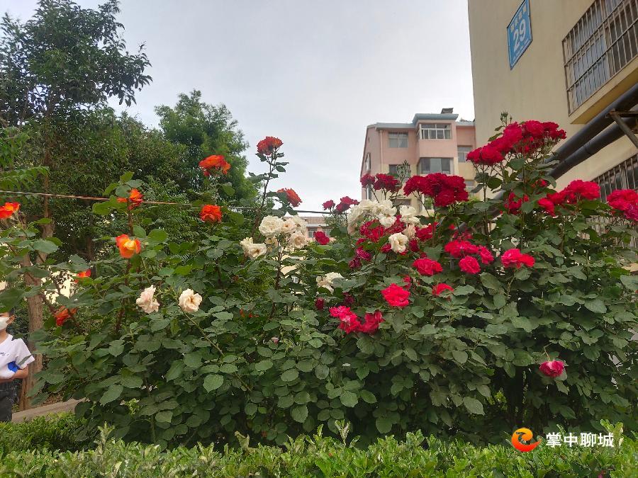 微信图片_20200520113942.jpg